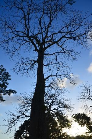 Beautiful tree near Gatun Lake.